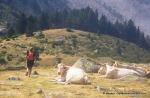 pirineo frances fotos rutas y paisajes   (24)