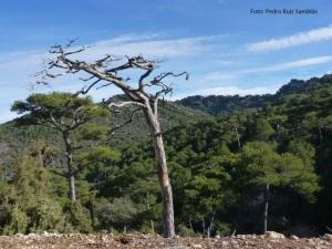 Sendero GR 247 Cazorla Segura y las Villas fotos (8)