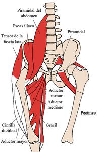 La cintilla iliotibial y el conjunto pélvico