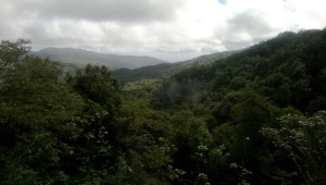 ultra trail transkarureka guadaloupe: Selva impenetrable.