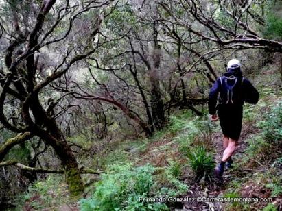 ultra trail portugal madeira island ultra trail 2014 fotos fernando gonzalez (8)