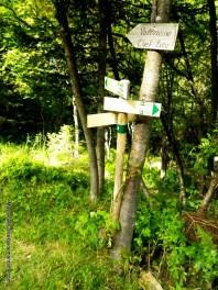 Descenso Catogne a Vallorcine por los bosques
