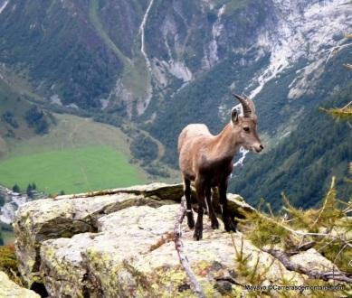 rutas mont blanc trail running lac blanc fotos mayayo (11)