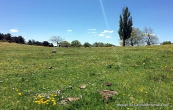 trail running madrid (52)