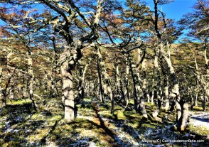 ultrafiord 2017 trail running patagonia (40)